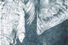 African-Elephant-pencil-drawing-emily-dewsnap-art