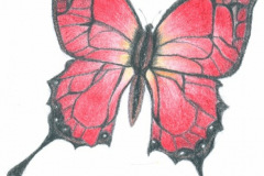 Butterfly-Icon-colour-pencils-emily-dewsnap-art