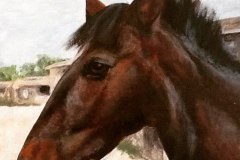 Ruby-Commission-horse-painting-emily-dewsnap-art