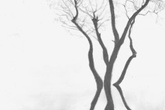 Trees-in-Winter-pencil-drawing-emily-dewsnap-art
